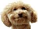 :smugdog: