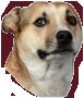 :dog: